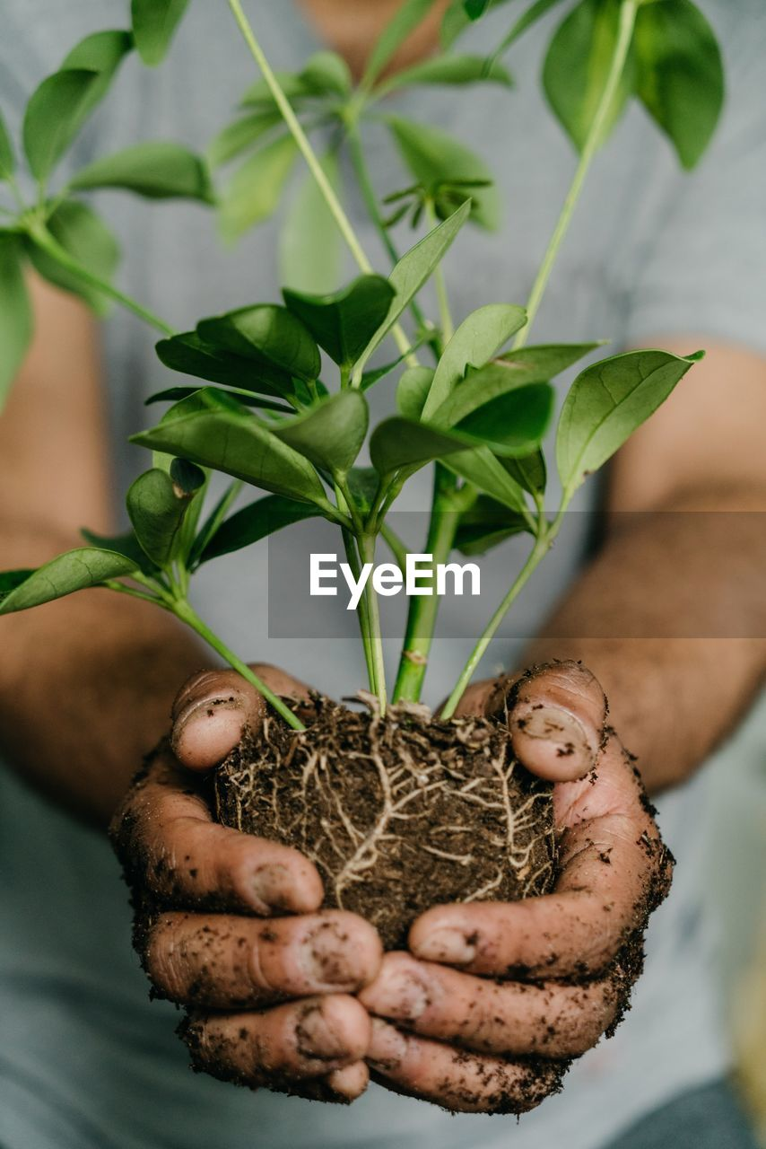 Midsection of hands holding plant