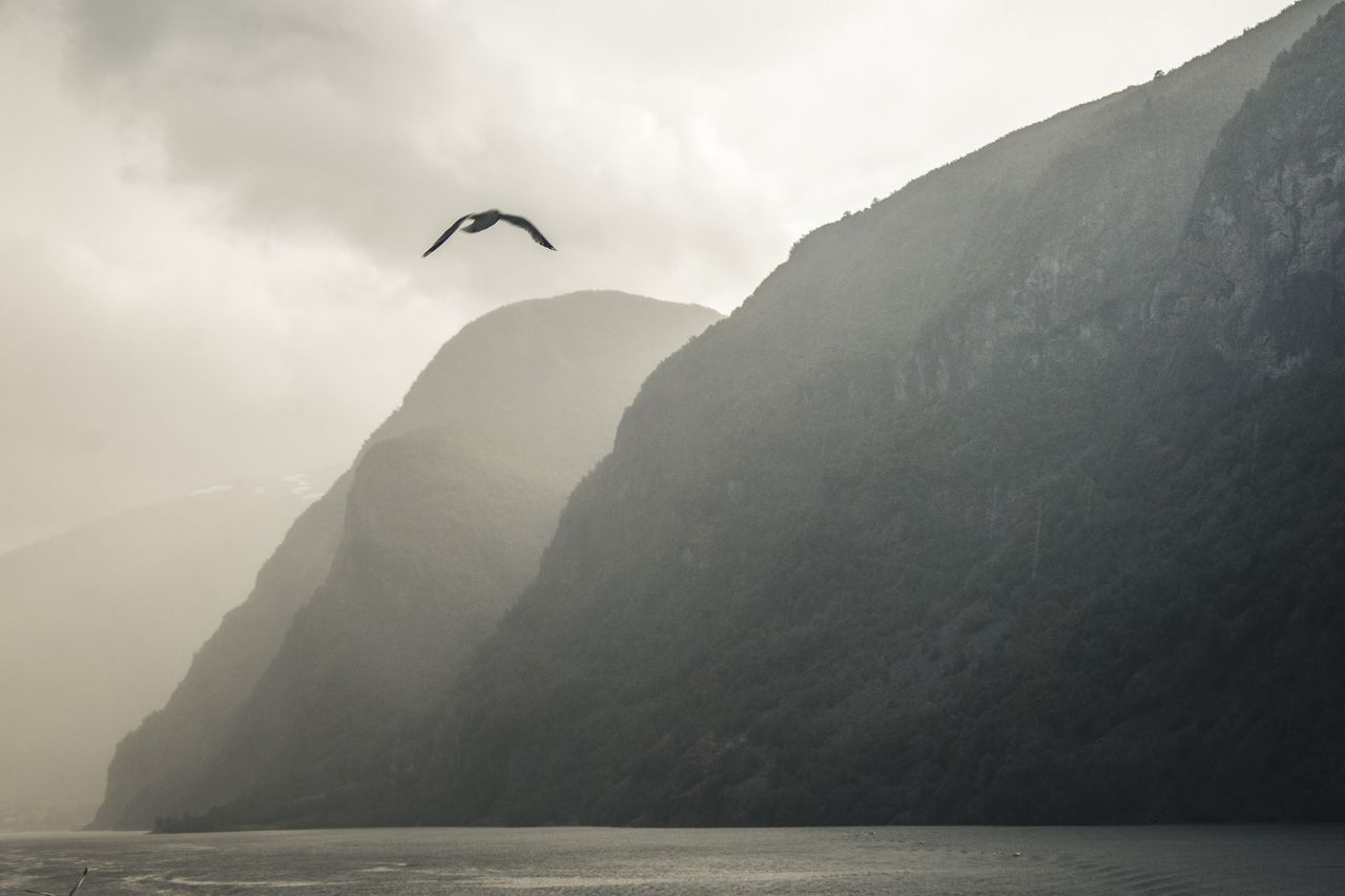 BIRD FLYING OVER SEA AGAINST MOUNTAINS