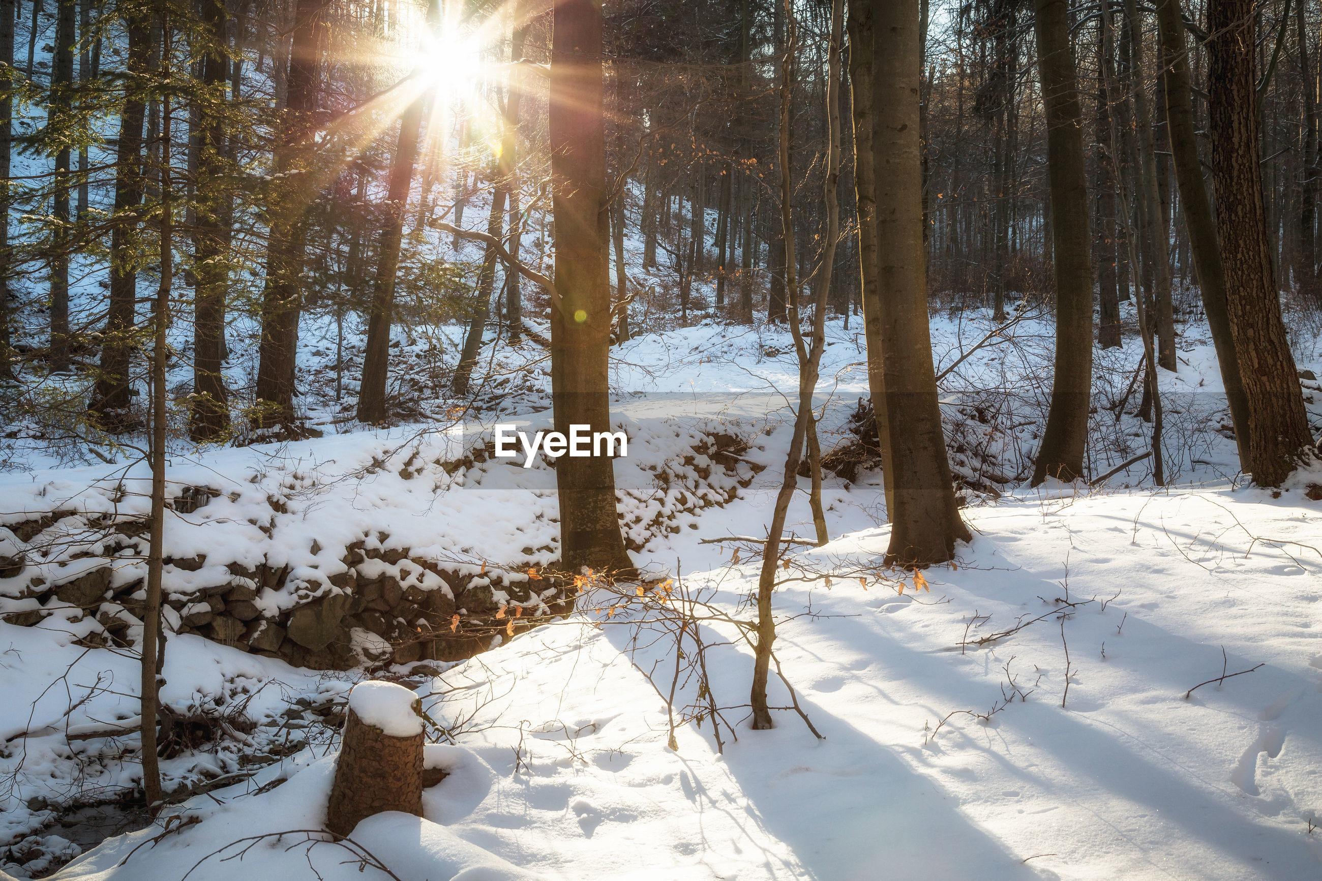 VIEW OF TREES ON SNOW COVERED LANDSCAPE