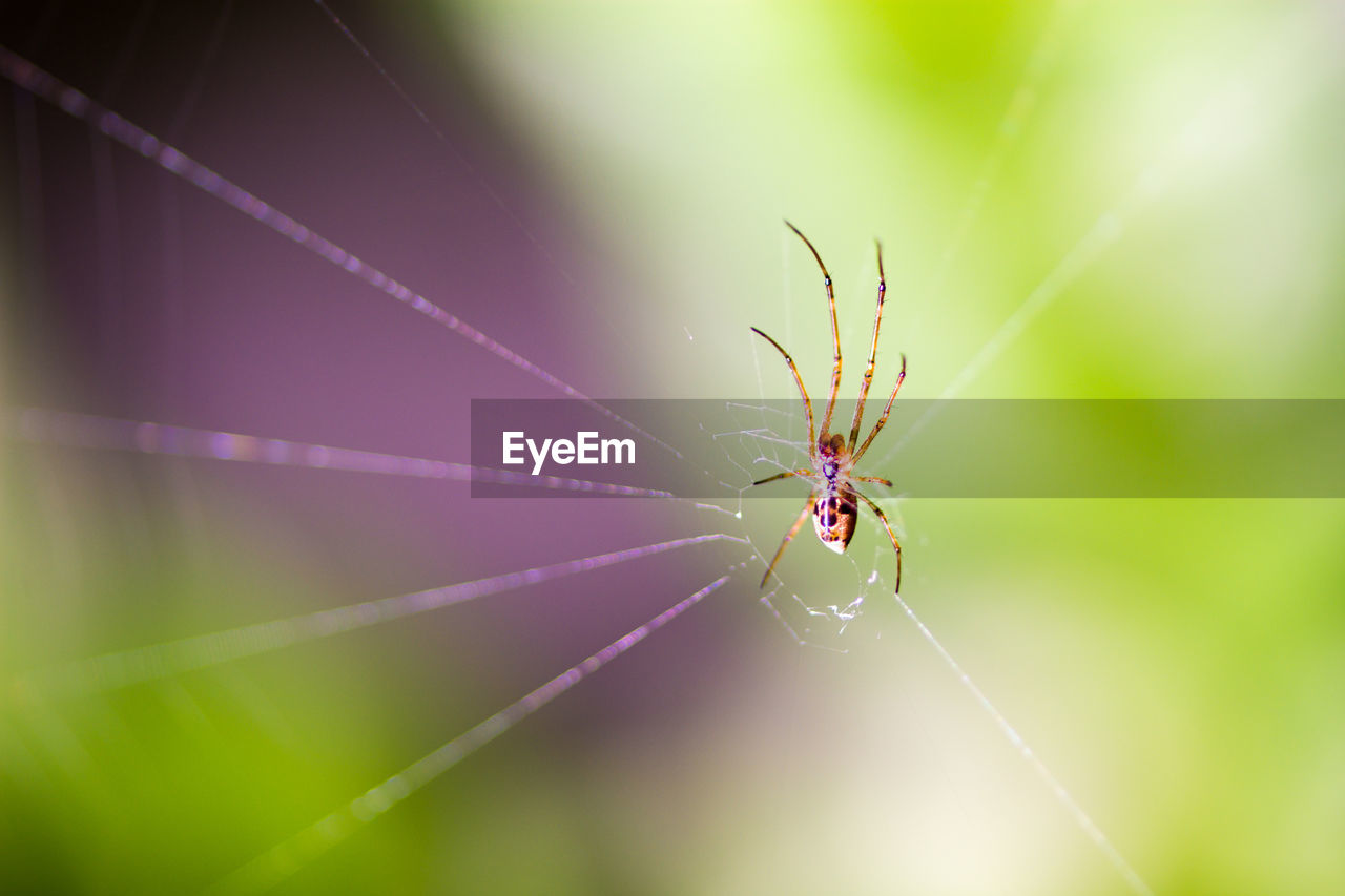 fragility, spider web, close-up, invertebrate, focus on foreground, spider, arachnid, animal wildlife, insect, one animal, animals in the wild, animal themes, vulnerability, animal, day, no people, arthropod, nature, selective focus, zoology, outdoors, animal leg, web