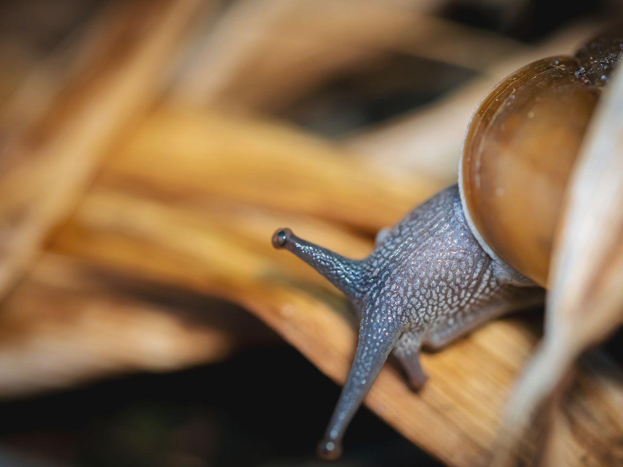 Close up big snail