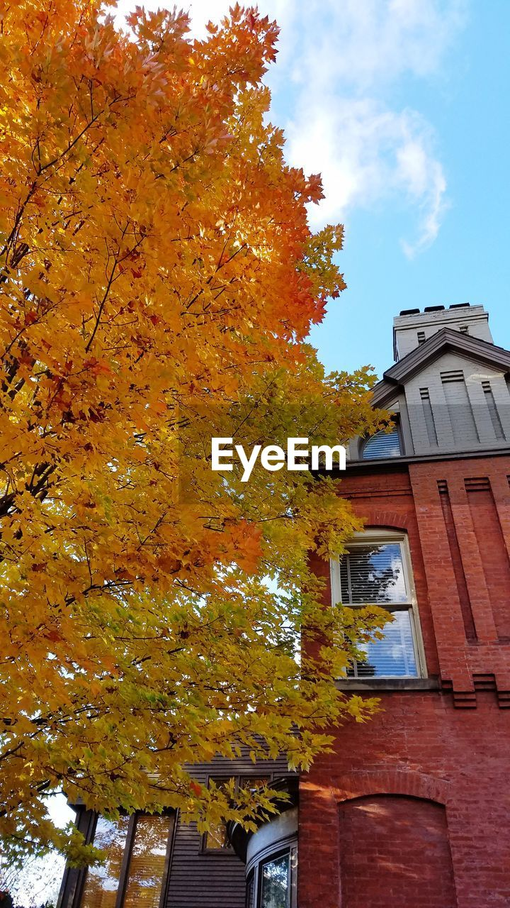 building exterior, built structure, architecture, tree, autumn, building, low angle view, plant, change, orange color, nature, sky, day, no people, outdoors, cloud - sky, residential district, growth, window, house