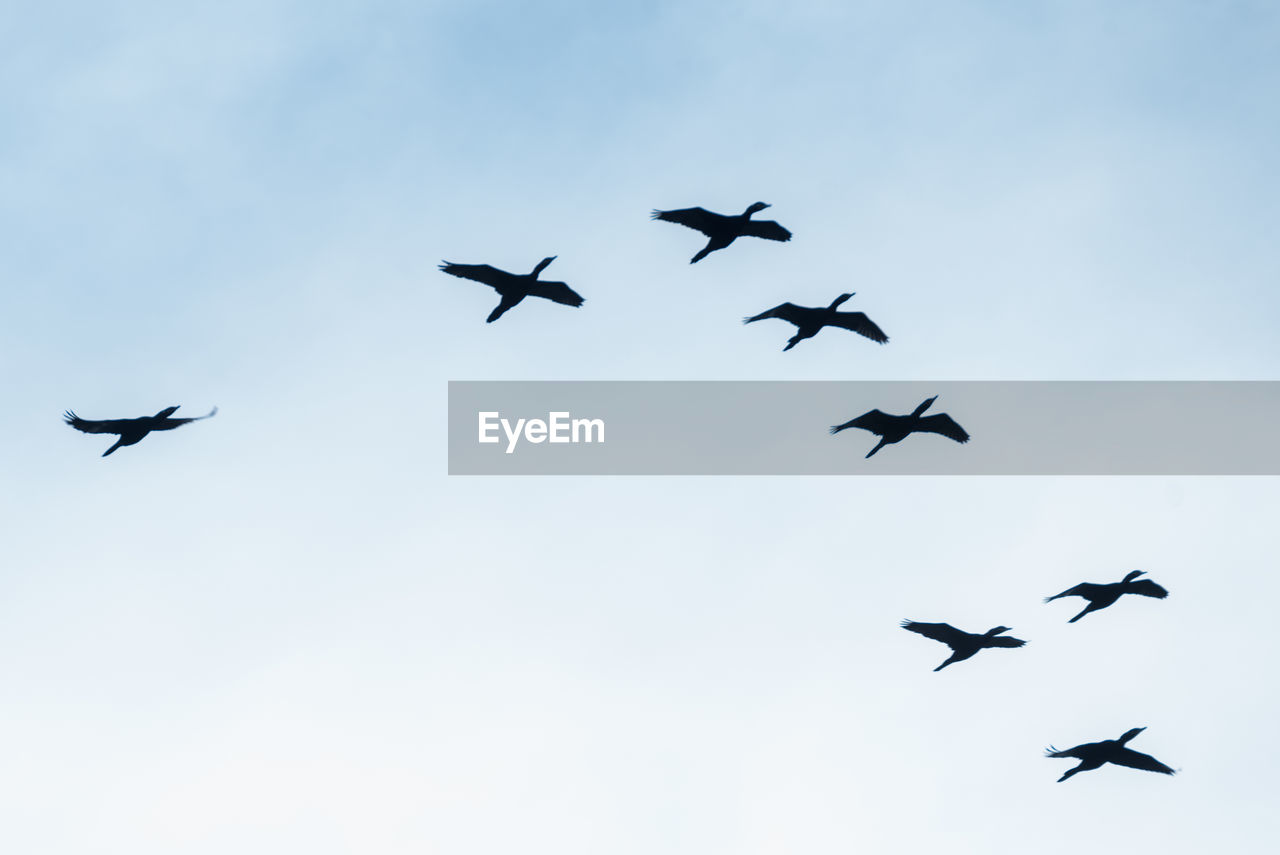 LOW ANGLE VIEW OF BIRDS AGAINST CLEAR SKY