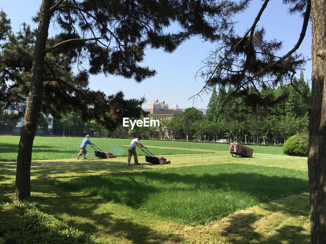 Men mowing green lawn against clear sky