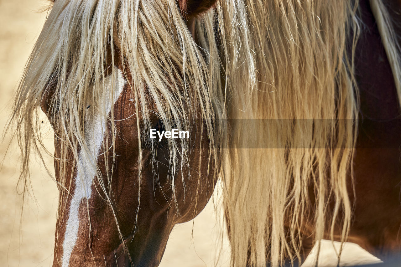 domestic, domestic animals, mammal, pets, horse, hair, livestock, one animal, vertebrate, real people, mane, blond hair, animal wildlife, women, close-up, focus on foreground, one person, animal hair, hairstyle, herbivorous, human hair, straight hair
