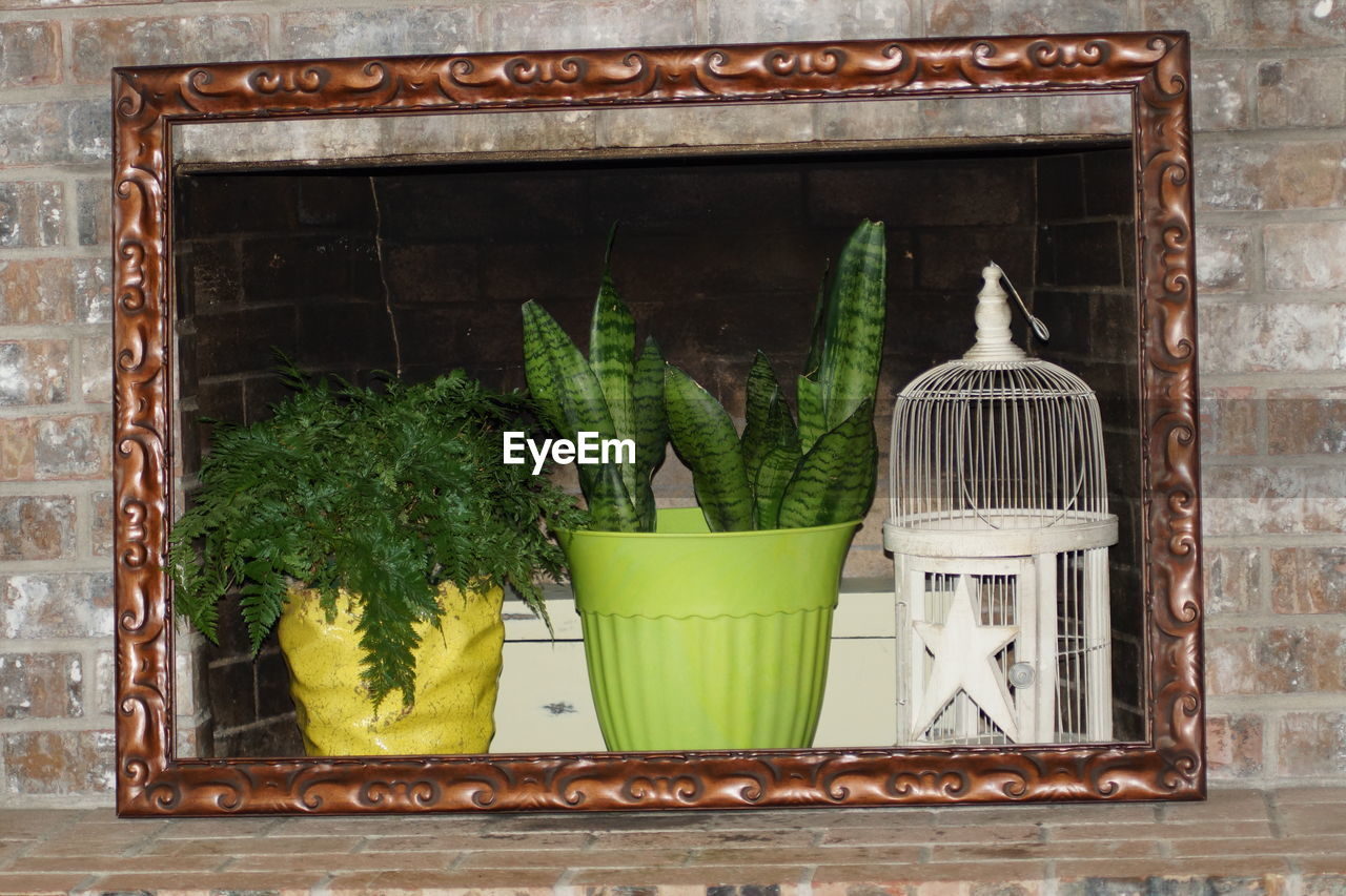 green color, plant, potted plant, no people, growth, nature, window, day, leaf, indoors, plant part, container, architecture, glass - material, window sill, food, built structure, close-up, transparent, houseplant