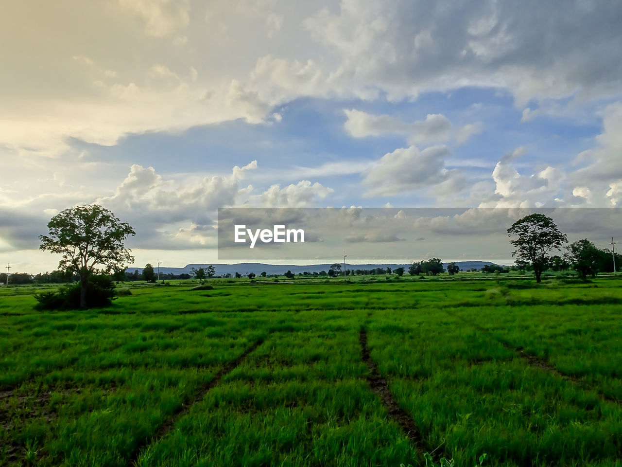 landscape, cloud - sky, plant, environment, field, sky, land, agriculture, scenics - nature, growth, beauty in nature, rural scene, tranquil scene, tranquility, green color, farm, nature, tree, crop, no people, outdoors, plantation