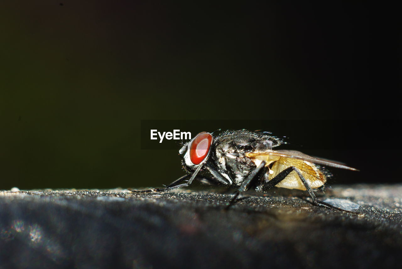 Close-Up Of Housefly On Surface
