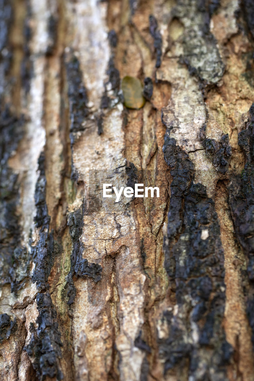 tree trunk, trunk, textured, tree, backgrounds, full frame, close-up, plant, rough, pattern, wood - material, nature, day, natural pattern, no people, plant bark, selective focus, weathered, outdoors, extreme close-up, bark, textured effect, lichen