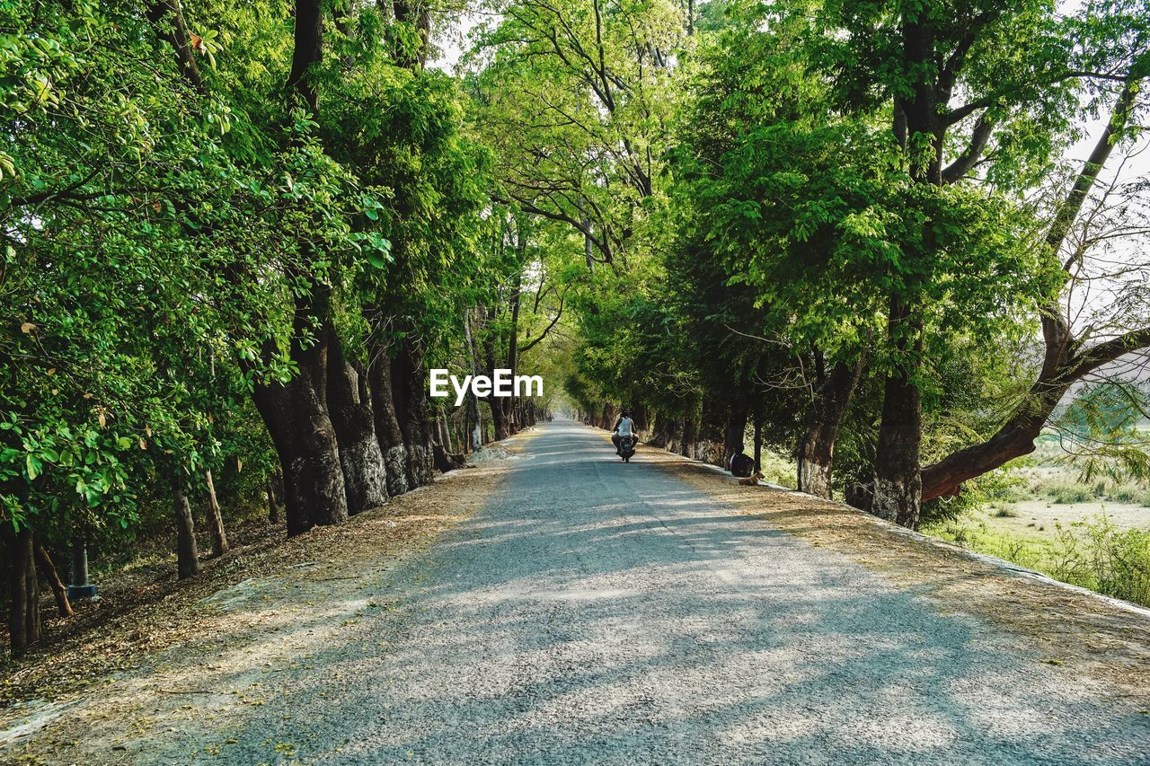tree, plant, direction, the way forward, growth, nature, transportation, forest, road, day, beauty in nature, green color, land, tranquility, diminishing perspective, tranquil scene, outdoors, no people, footpath, green, treelined, tree canopy