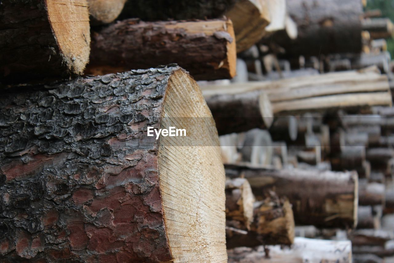 Close-up of logs at forest