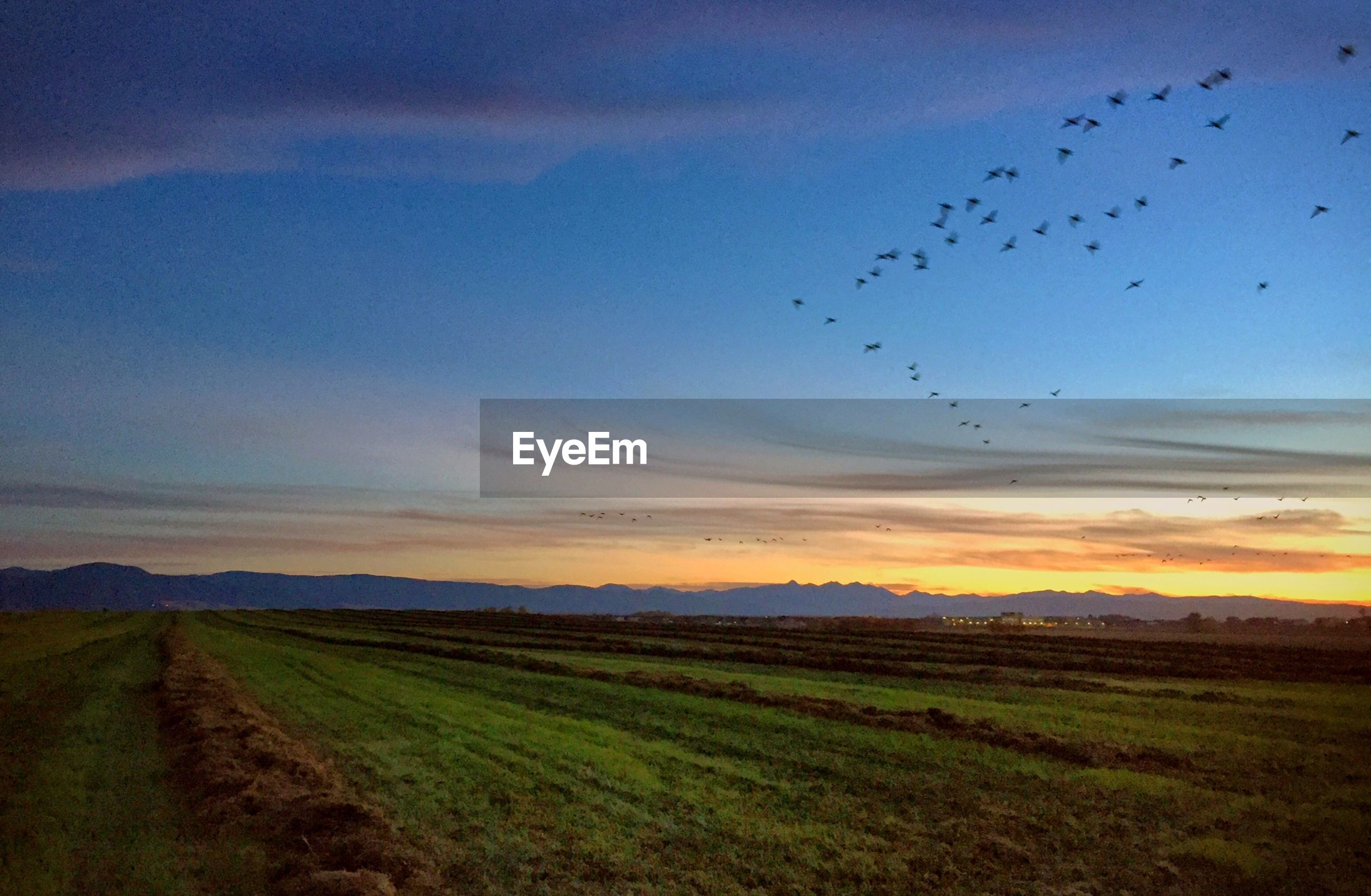Scenic view of farm against sky during sunset