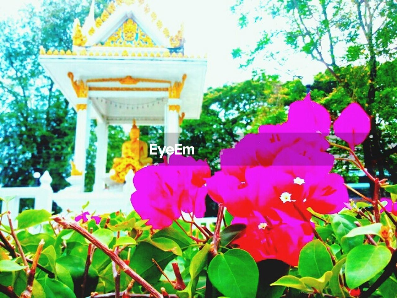 flower, outdoors, park - man made space, no people, nature, day, leaf, pink color, beauty in nature, building exterior, tree, architecture, city, close-up, sky