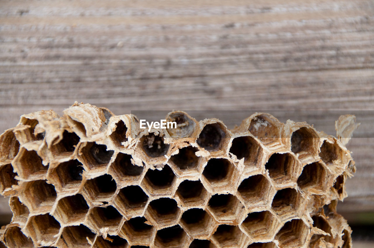 Close-Up Of Honeycomb By Wooden Wall