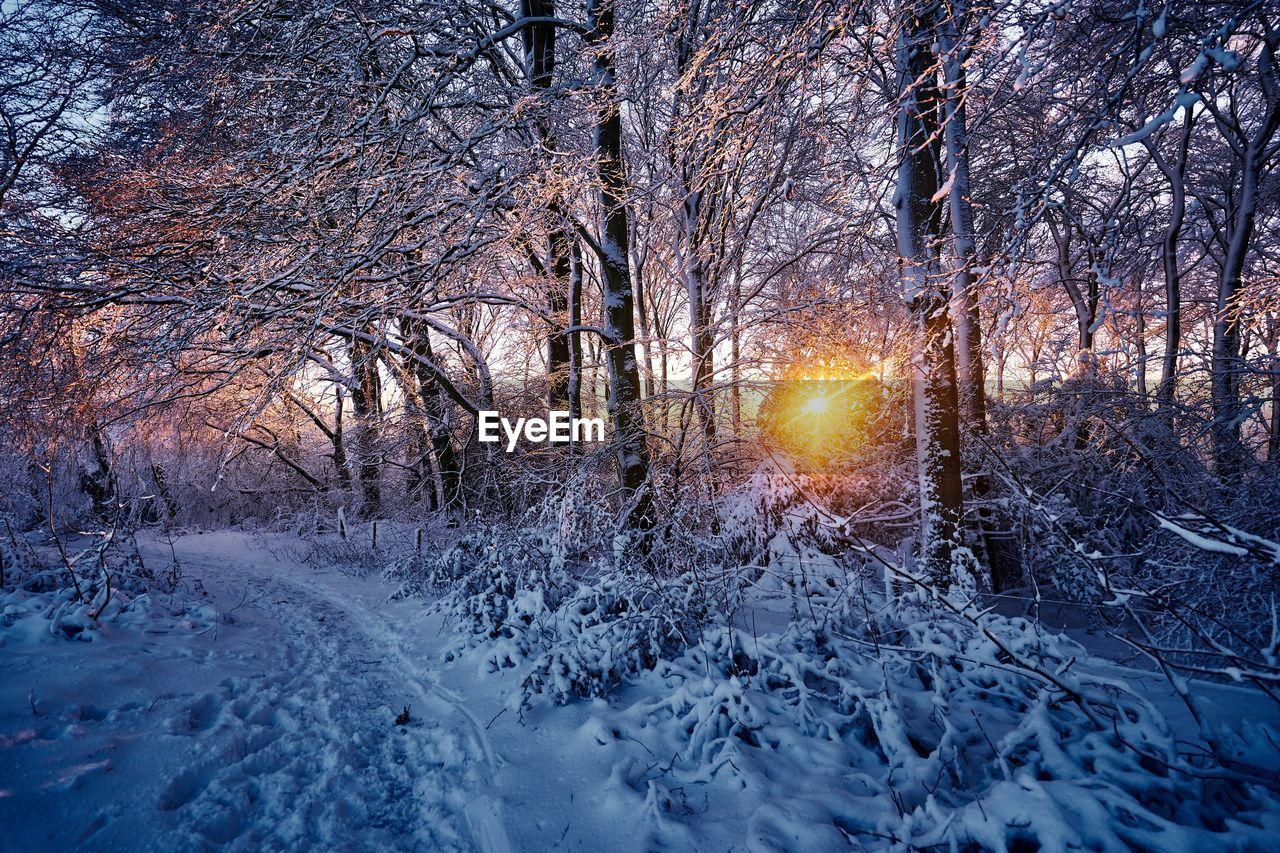 snow, winter, cold temperature, tree, nature, bare tree, beauty in nature, branch, scenics, no people, tranquil scene, tranquility, forest, frozen, outdoors, sun, sunset, illuminated, sky, day, snowing, freshness