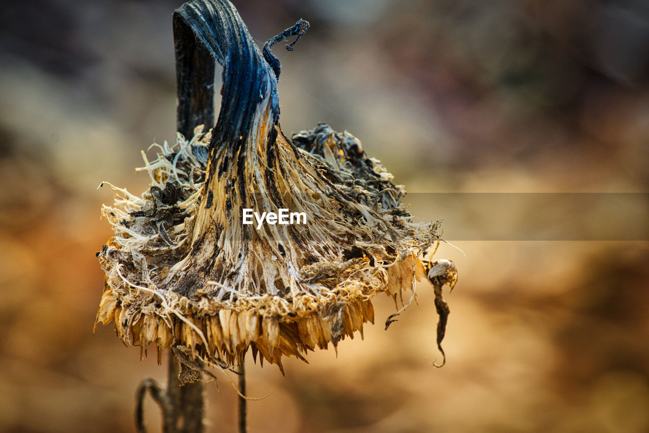 focus on foreground, close-up, no people, dry, day, nature, selective focus, outdoors, plant, animal, hanging, wood - material, animal themes, dried plant, beauty in nature, brown, animal wildlife, animals in the wild, one animal, dead plant, wilted plant, dried