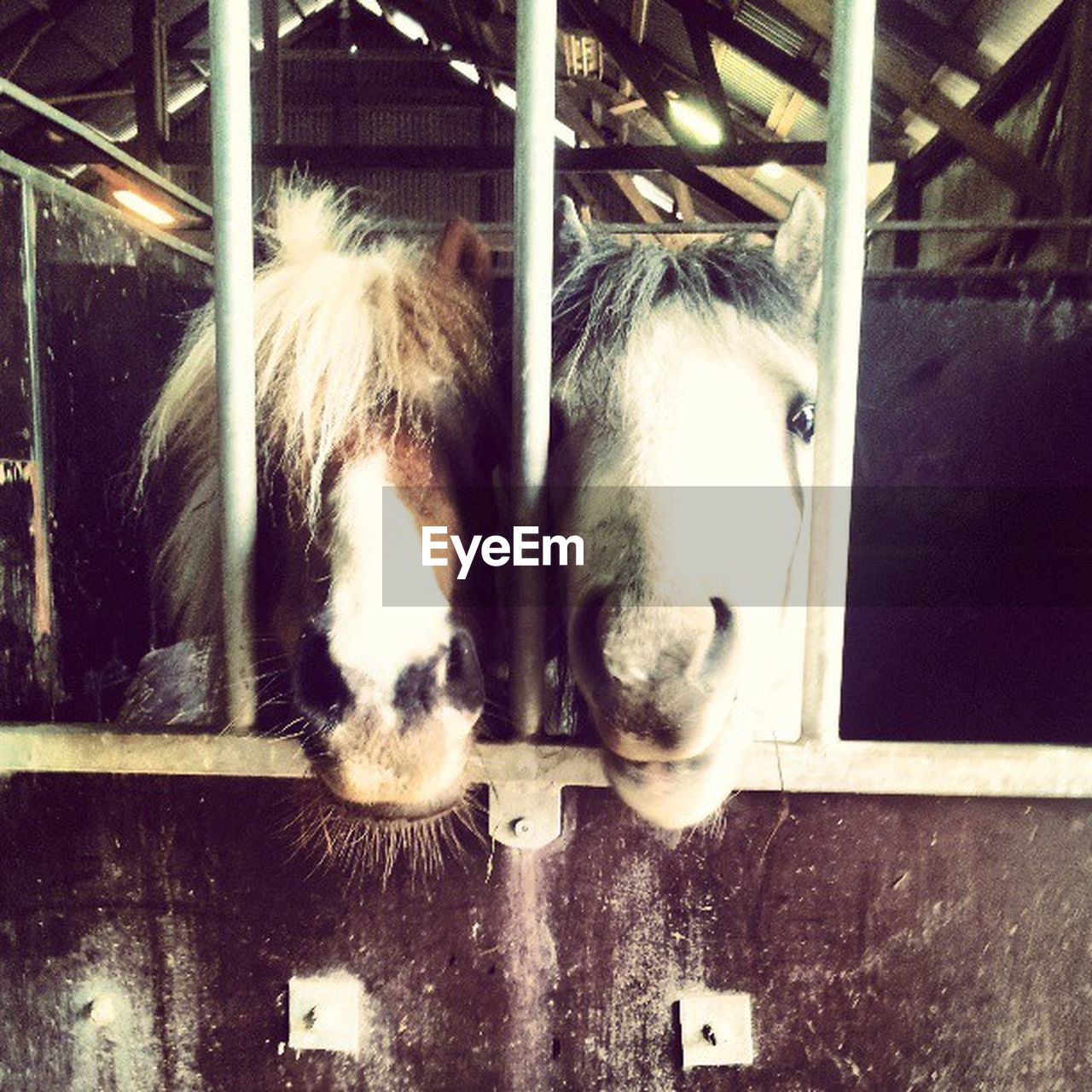 domestic animals, animal themes, mammal, one animal, pets, horse, dog, no people, day, outdoors, close-up, nature