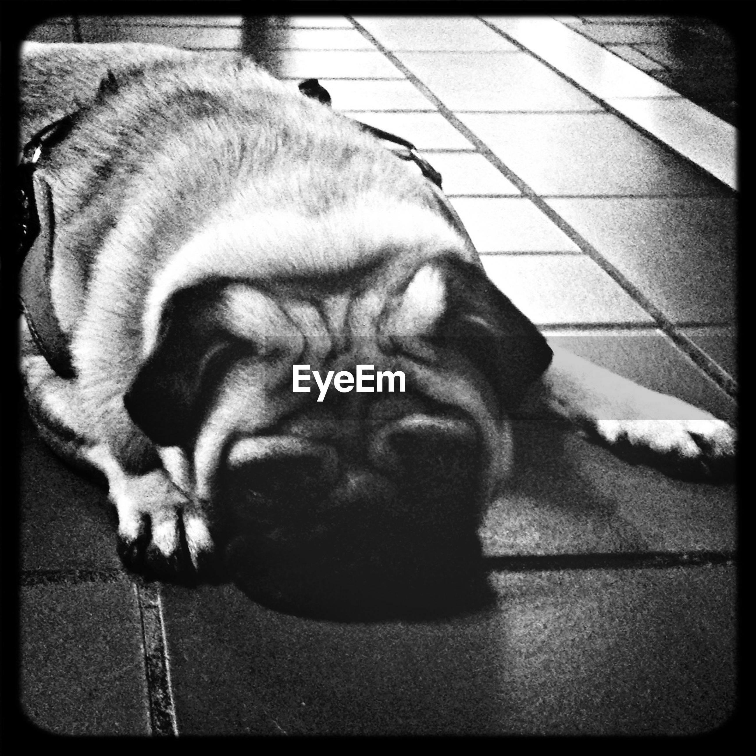 pets, domestic animals, transfer print, mammal, one animal, animal themes, sleeping, auto post production filter, relaxation, dog, lying down, resting, indoors, domestic cat, high angle view, cat, eyes closed, close-up, tiled floor, no people
