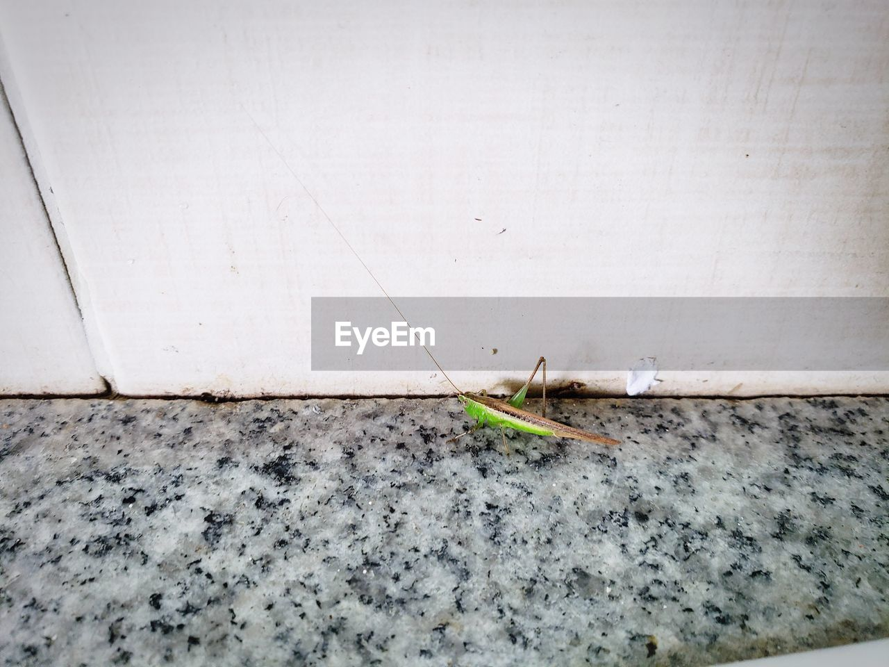 no people, wall - building feature, day, insect, close-up, animal wildlife, invertebrate, animal, animal themes, one animal, outdoors, animals in the wild, nature, plant, copy space, growth, built structure, flooring, dirt, architecture, concrete