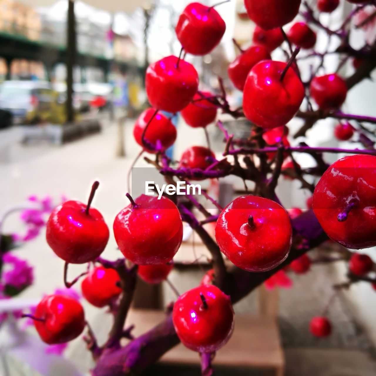 red, focus on foreground, close-up, no people, fruit, food and drink, food, freshness, healthy eating, day, berry fruit, tree, plant, nature, selective focus, growth, cherry, outdoors, ripe, branch, red currant