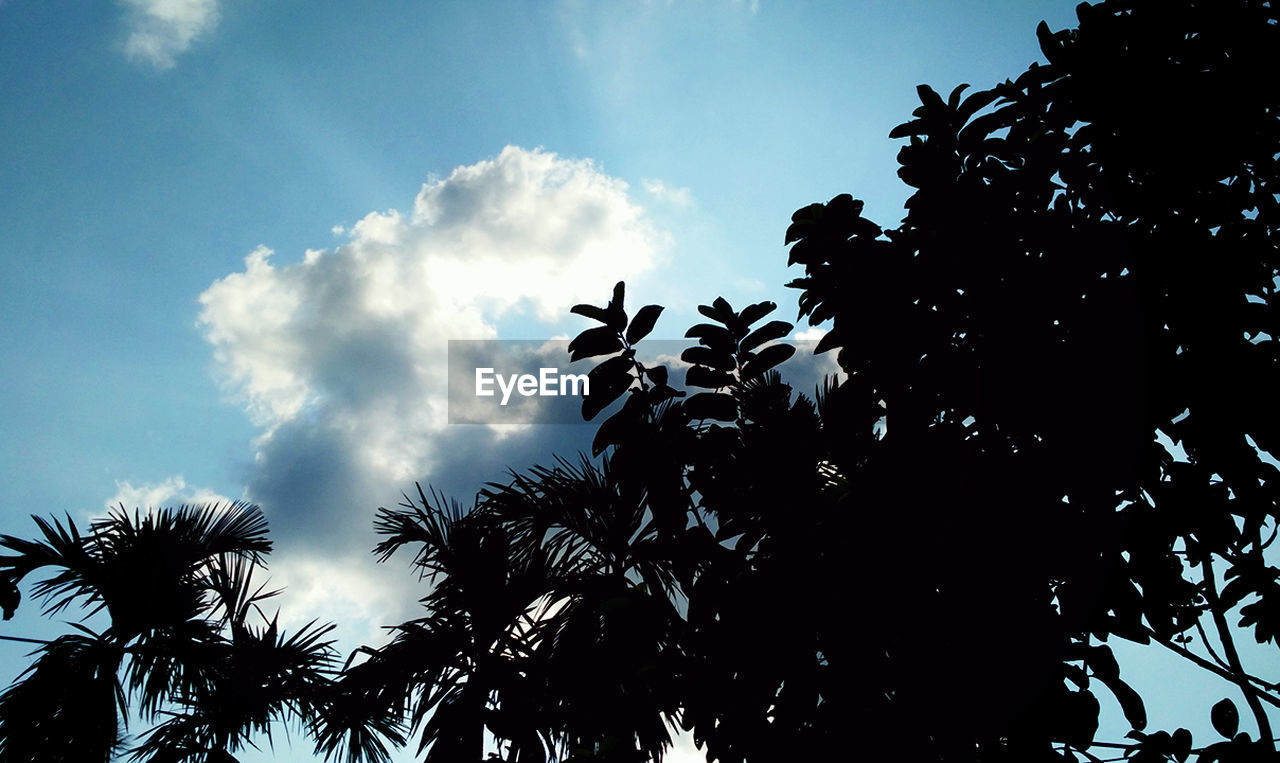 low angle view, sky, tree, silhouette, day, growth, cloud - sky, nature, animal themes, no people, animals in the wild, outdoors, bird, beauty in nature, large group of animals