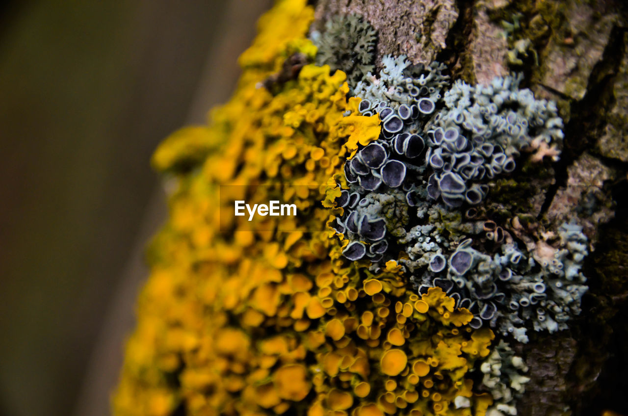 yellow, flower, close-up, fragility, nature, outdoors, day, growth, no people, beauty in nature, lichen, freshness, flower head