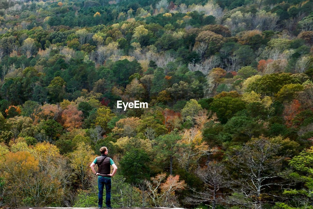 Rear view of man standing against trees at forest during autumn