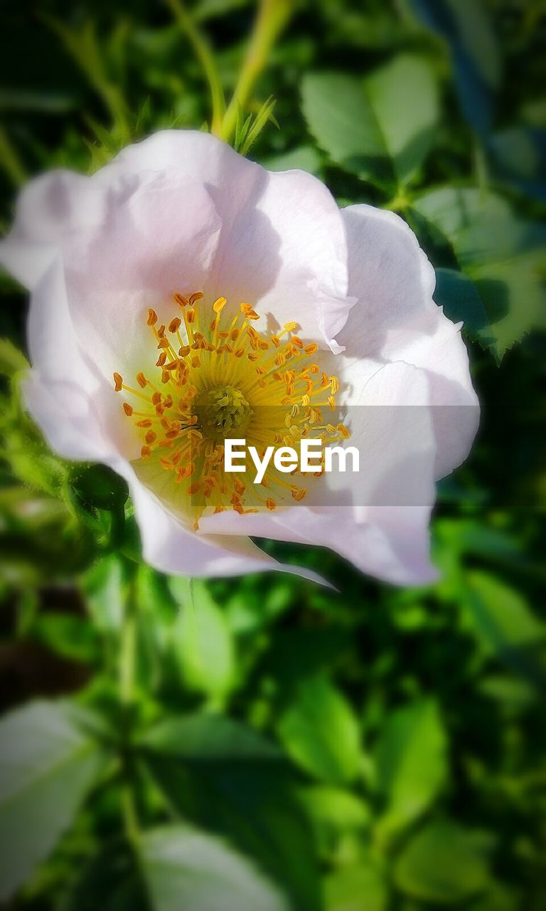 flower, petal, fragility, beauty in nature, nature, flower head, growth, white color, freshness, plant, pollen, close-up, no people, outdoors, day, blooming, yellow