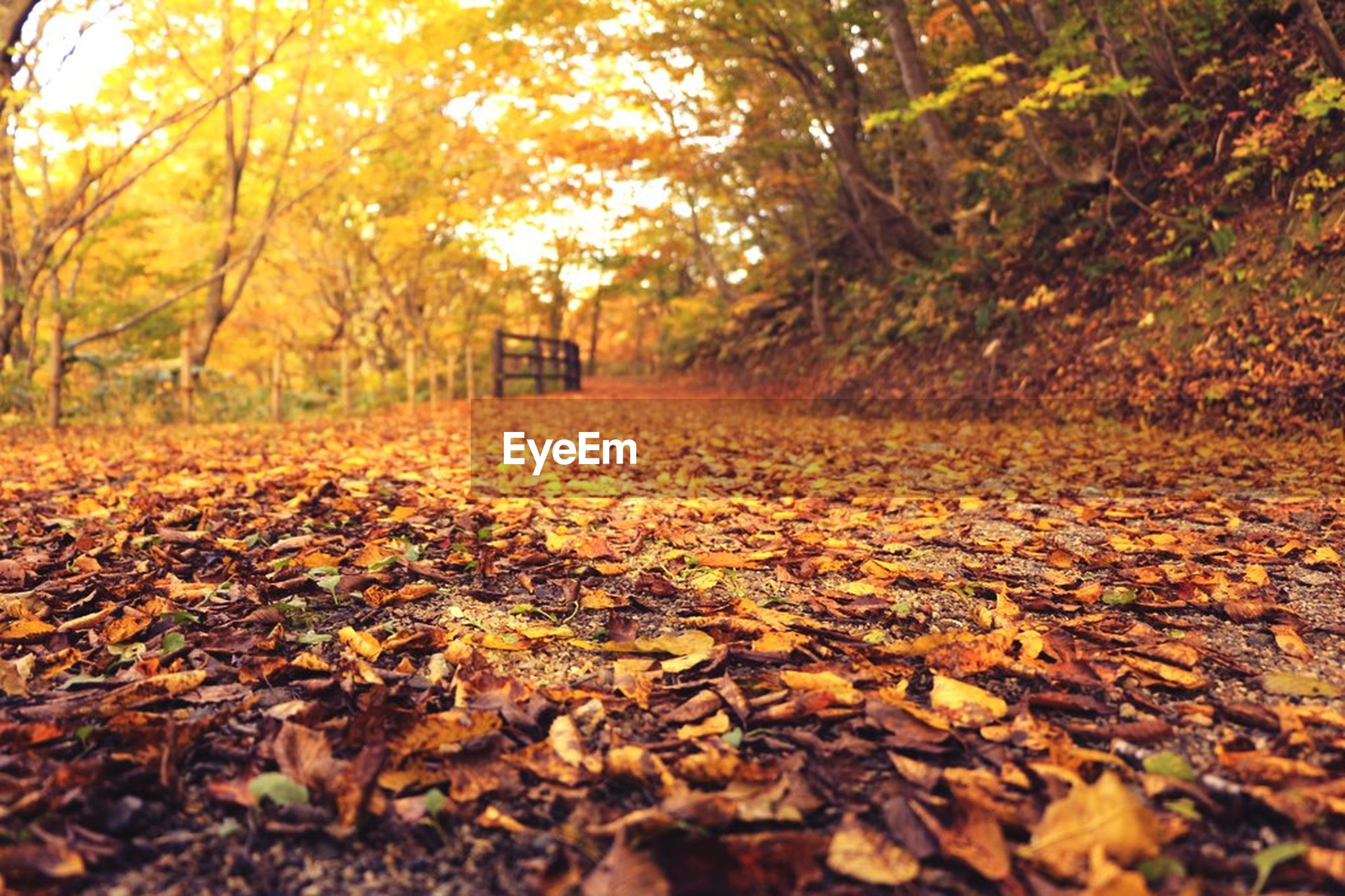 autumn, change, season, leaf, tree, fallen, leaves, dry, orange color, tranquility, nature, surface level, the way forward, yellow, falling, tranquil scene, beauty in nature, forest, transportation, outdoors