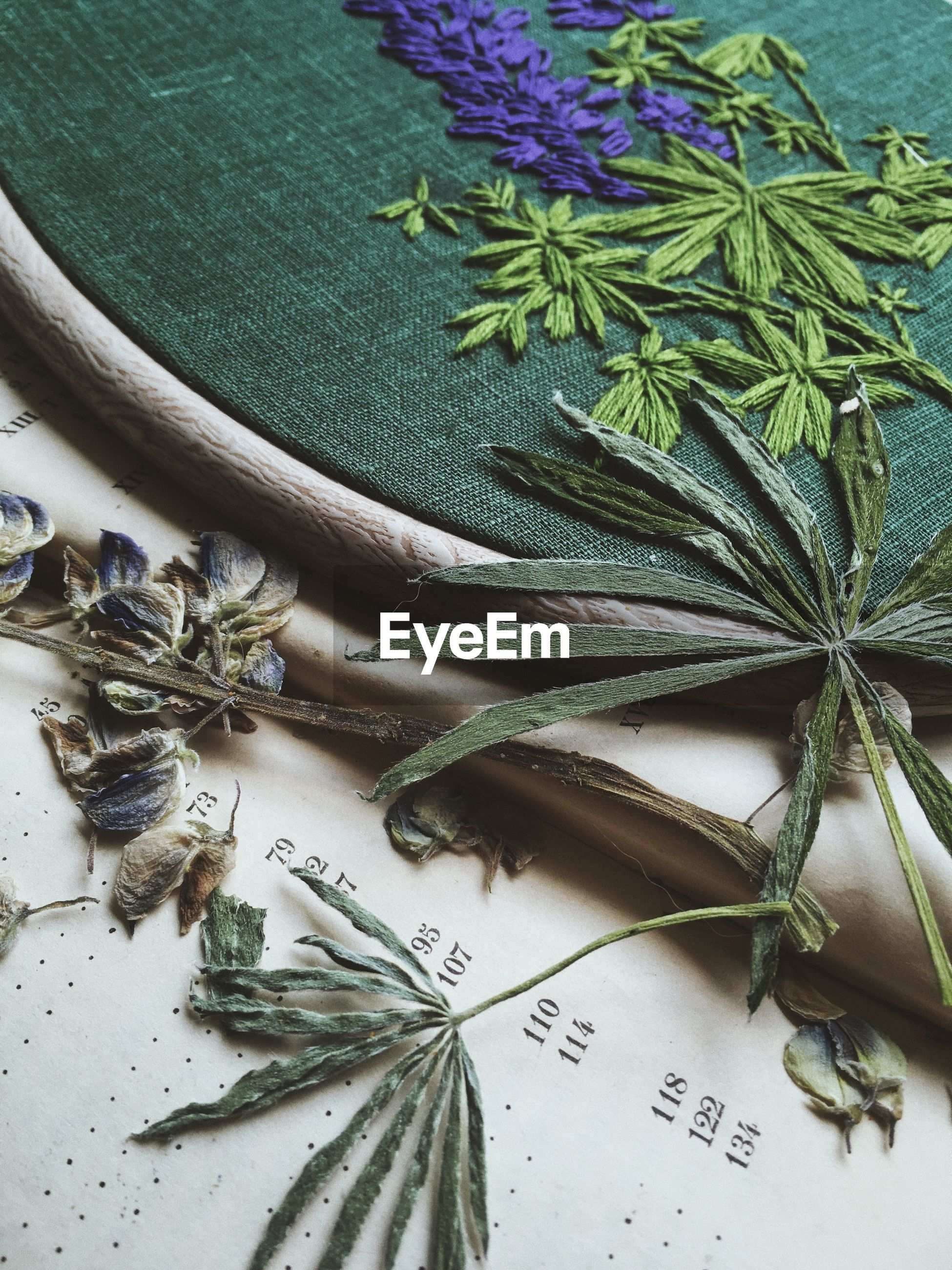 HIGH ANGLE VIEW OF LEAVES AND PLANT IN TABLE
