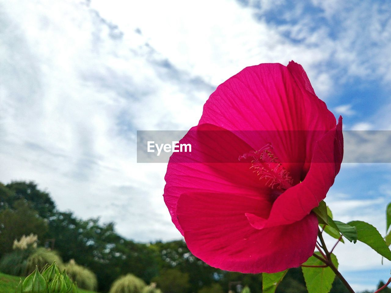 flower, petal, nature, beauty in nature, fragility, flower head, freshness, day, red, growth, outdoors, blooming, plant, sky, close-up, cloud - sky, no people, hibiscus, water, petunia