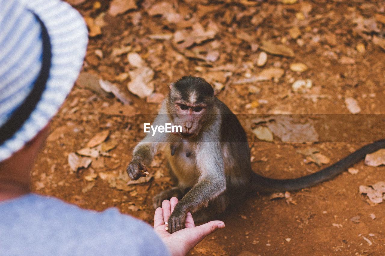 High Angle View Of Woman Feeding Monkey Sitting On Field