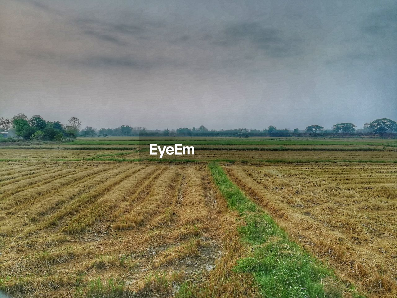 field, landscape, agriculture, tranquility, rural scene, tranquil scene, nature, beauty in nature, no people, scenics, day, outdoors, growth, sky