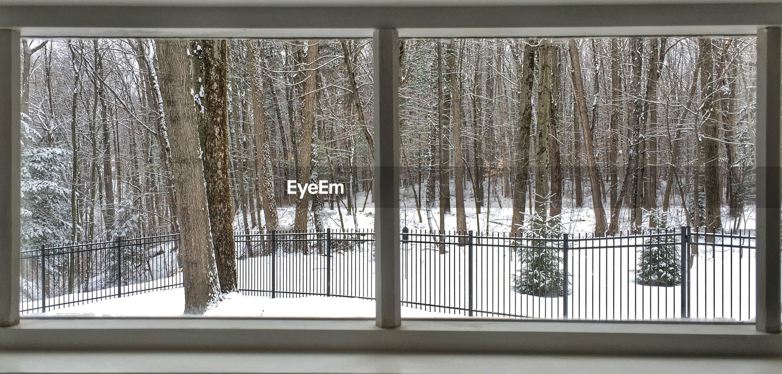 Bare trees on snow covered field seen through window