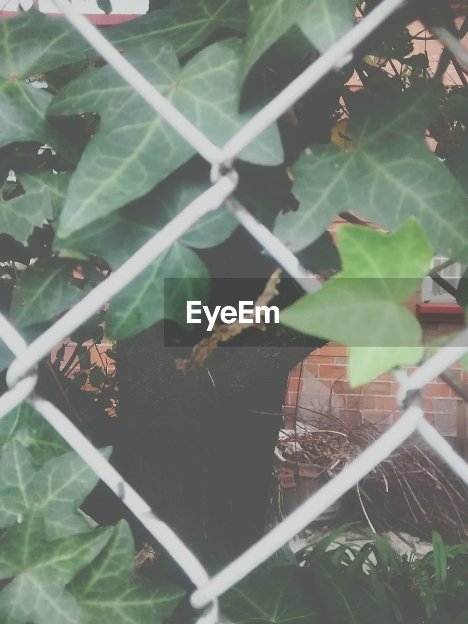 leaf, chainlink fence, protection, metal, safety, plant, green color, outdoors, day, no people, close-up, growth