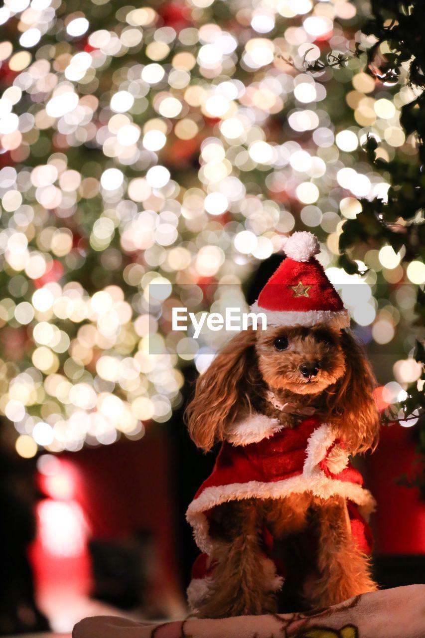 mammal, christmas, canine, dog, one animal, celebration, holiday, pets, domestic, domestic animals, animal themes, animal, tree, vertebrate, christmas tree, no people, decoration, illuminated, christmas decoration, christmas ornament, small