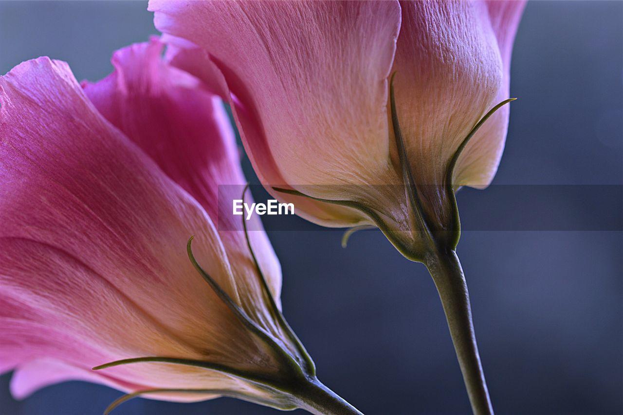 Macro Shot Of Purple Flower