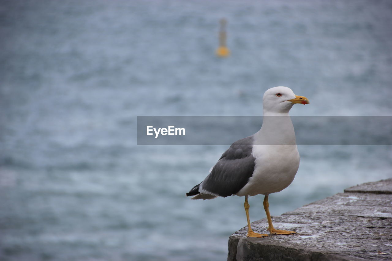 Close-Up Of Seagull Perching On Retaining Wall Against Sea
