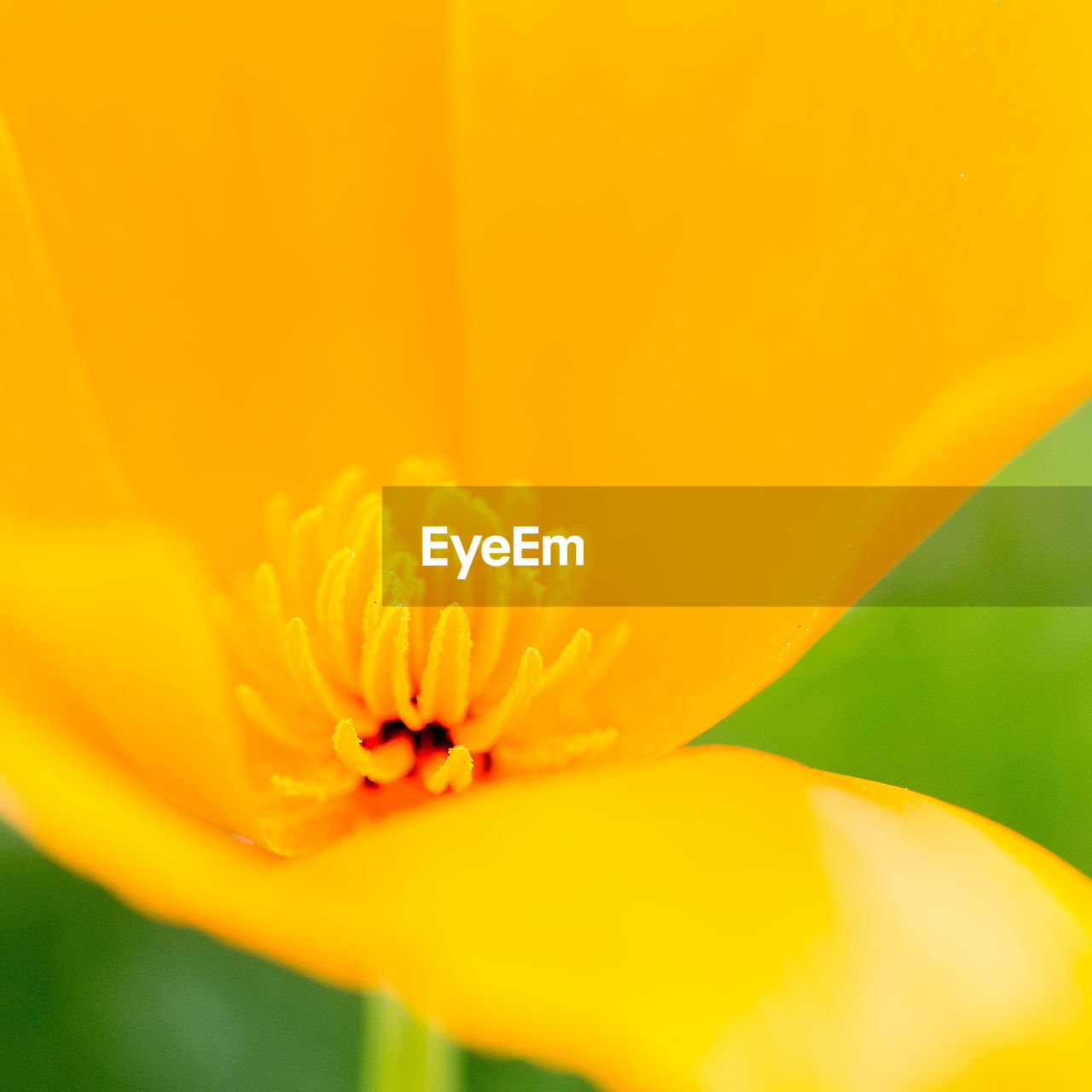 flower, petal, beauty in nature, fragility, nature, freshness, flower head, growth, yellow, close-up, selective focus, plant, no people, outdoors, day, blooming