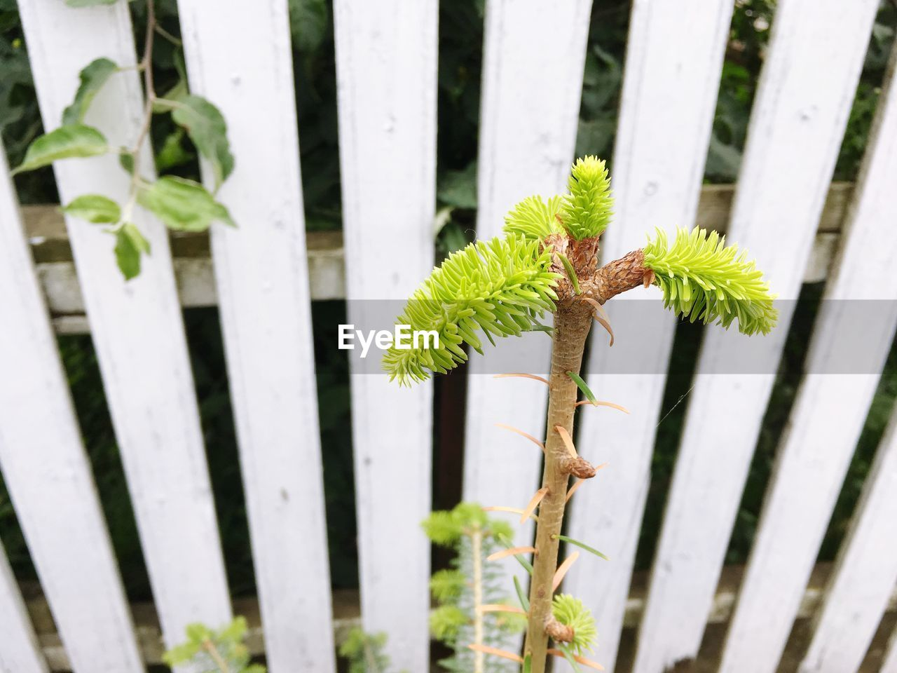 green color, boundary, fence, plant, barrier, growth, no people, close-up, day, leaf, nature, outdoors, plant part, wood - material, focus on foreground, beauty in nature, security, safety, animal wildlife, protection