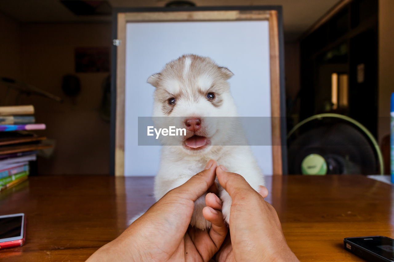 one animal, domestic, pets, mammal, domestic animals, real people, one person, indoors, vertebrate, home interior, holding, dog, human hand, canine, focus on foreground, human body part, hand, pet owner, finger