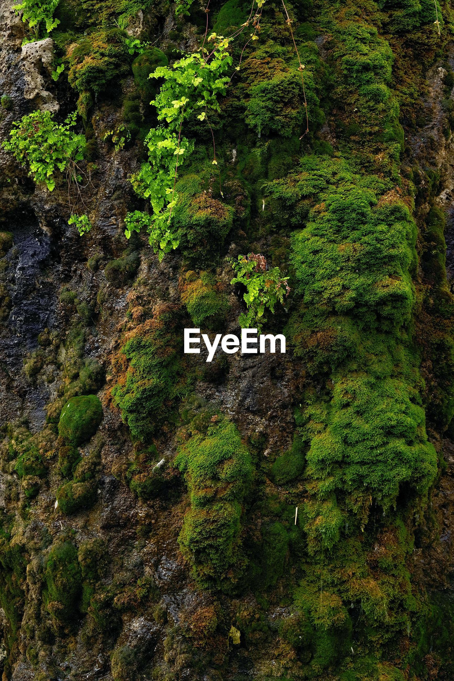 FULL FRAME SHOT OF TREES GROWING ON ROCK
