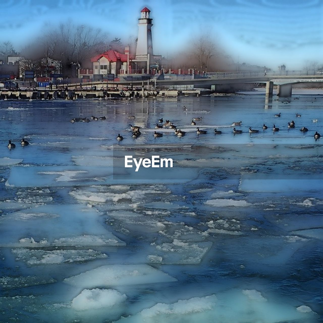 water, architecture, built structure, sky, cold temperature, day, travel destinations, building exterior, winter, outdoors, frozen, nature, cloud - sky, large group of animals, bird, no people, animals in the wild, animal themes, beauty in nature, city, ice rink