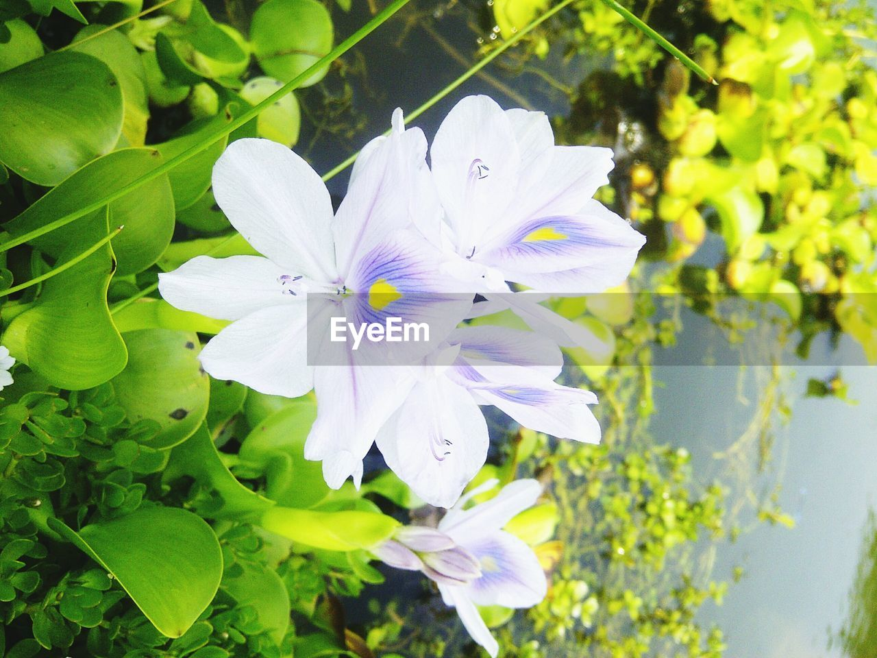 flower, petal, growth, fragility, nature, beauty in nature, plant, white color, flower head, freshness, day, blooming, outdoors, no people, close-up, leaf