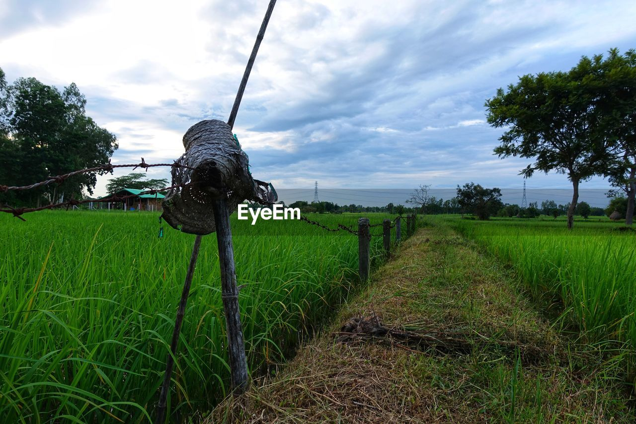 plant, sky, grass, land, field, agriculture, growth, landscape, cloud - sky, rural scene, environment, green color, nature, farm, tree, crop, day, no people, tranquility, scenics - nature, outdoors