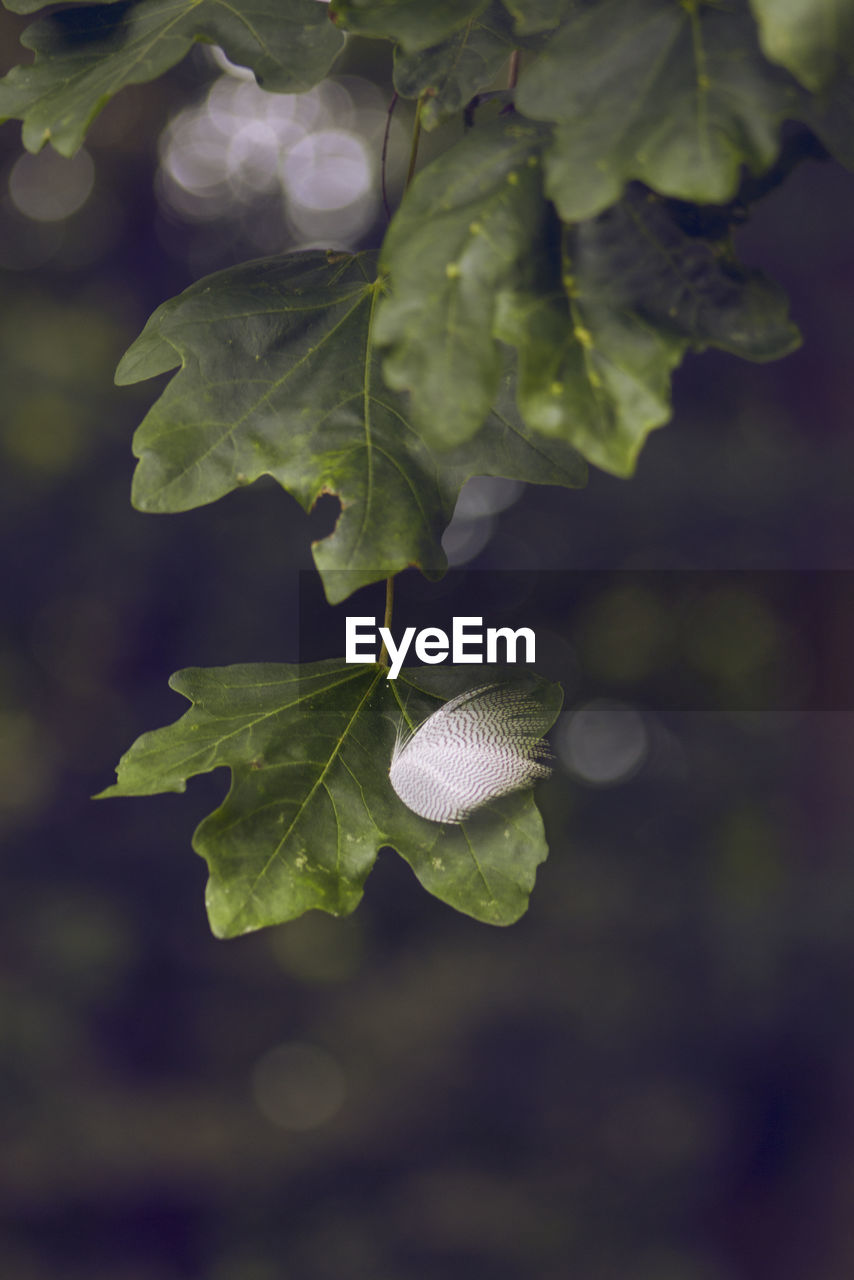 plant part, leaf, growth, plant, beauty in nature, close-up, green color, nature, no people, day, focus on foreground, vulnerability, fragility, freshness, outdoors, selective focus, high angle view, flower, flowering plant, leaf vein, leaves