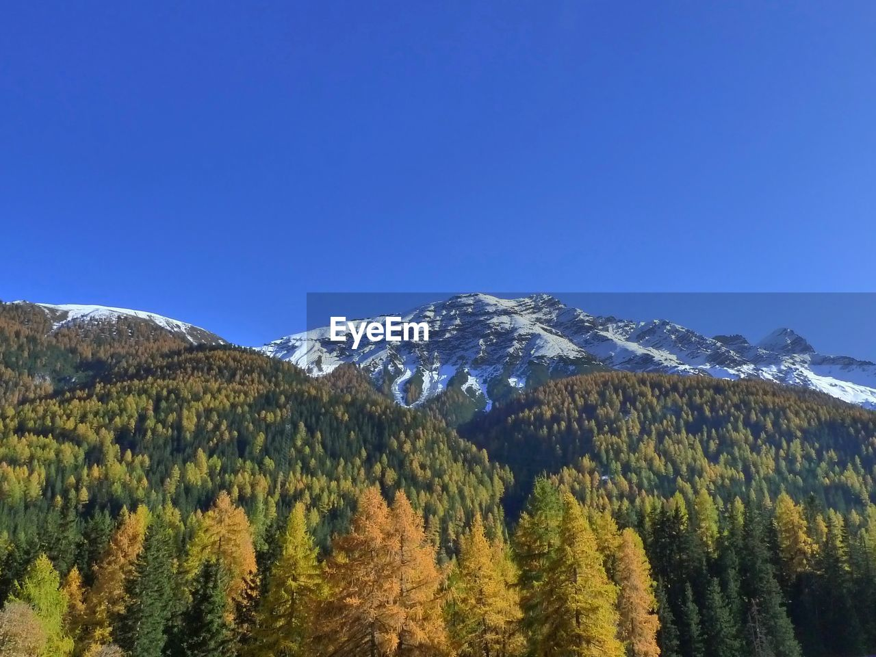 VIEW OF TREES ON MOUNTAIN