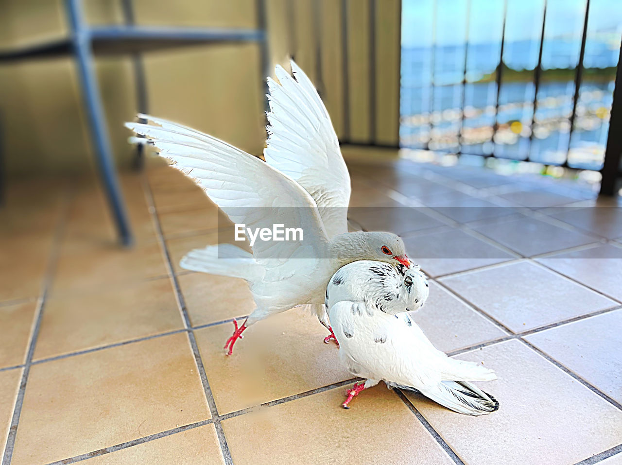 CLOSE-UP OF A BIRD FLYING OVER A TILED FLOOR