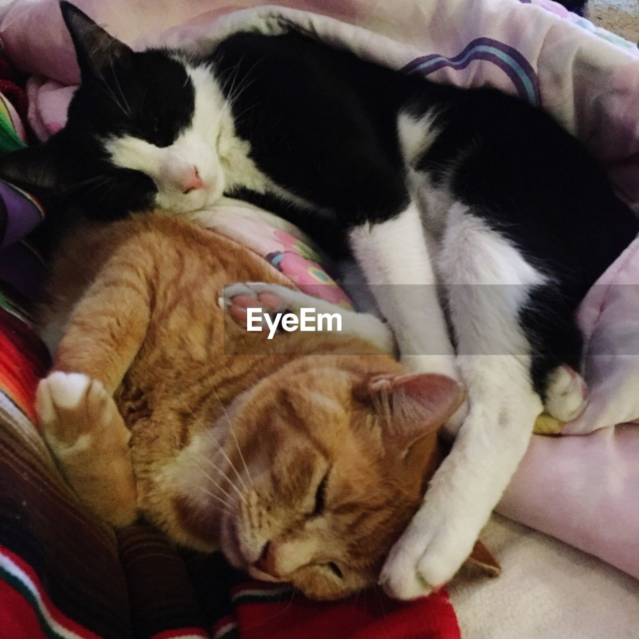 domestic cat, domestic animals, pets, animal themes, feline, mammal, cat, indoors, sleeping, one animal, relaxation, whisker, high angle view, lying down, bed, home interior, no people, close-up, day, kitten