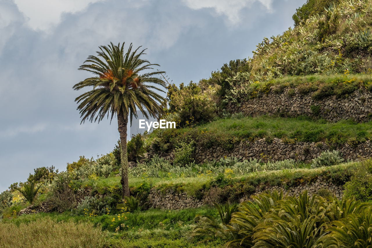 PALM TREES GROWING ON FIELD